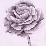 So zeichne ich eine Rose  – Monika Kunze