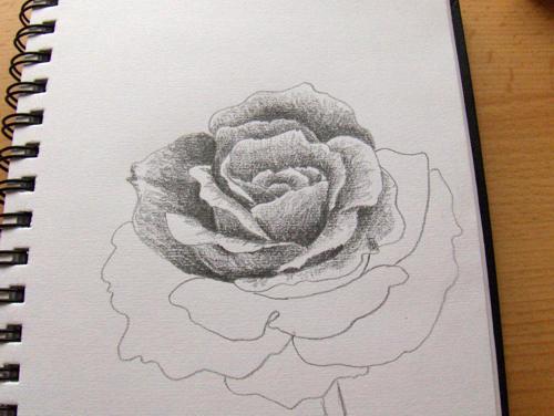 So zeichne ich eine rose monika kunze wie malt for Einfache leinwandbilder