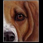 Tiere mit Pastellkreide zeichnen – Tieraugen zeichnen- Hund zeichnen – Petra Neuhaus