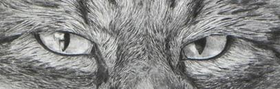 Tipps zum Zeichnen Grundlagen Motivwahl Schattieren Verblenden - Claudia Sottner