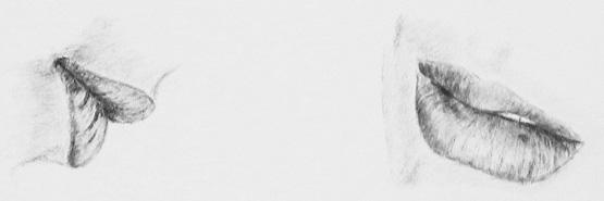 Gesichter zeichnen lernen -Details Nase Mund Augen Ohren - Claudia Sottner