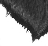 Haare oder Fell zeichnen – Eine Einführung – Anleitung von Mike Sibley