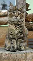 Wie zeichnet man eine Katze?  Pastellkreide Anleitung Schritt für Schritt – Karen Hargett