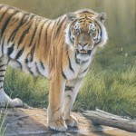 Ein Tiger am Wasser, Tiere zeichnen, Pastellzeichnung – Eric Wilson