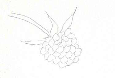 berrystep01web