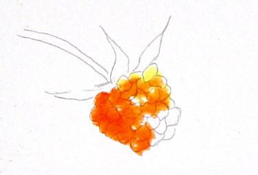 berrystep03web
