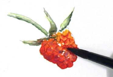berrystep08web