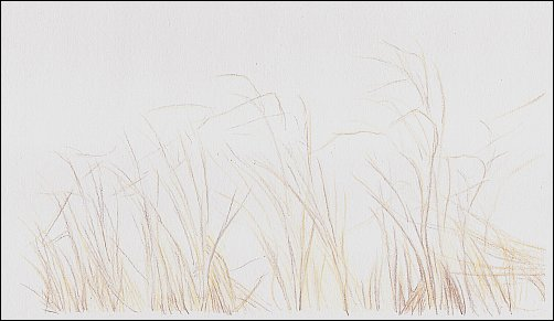autumn-grass-demo-02