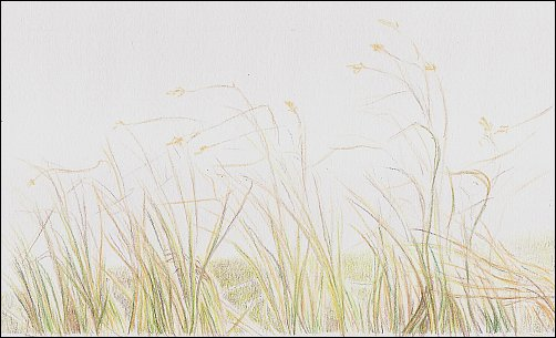 autumn-grass-demo-03