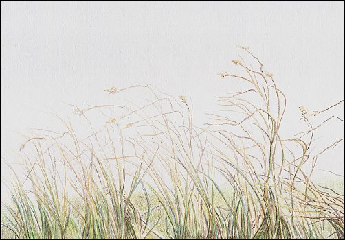 autumn-grass-demo-06
