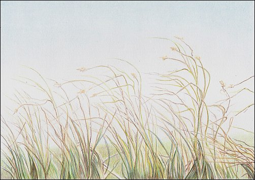 autumn-grass-demo-07