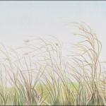 Gräser, Gras oder Stroh mit Buntstift zeichen