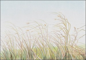 autumn-grass-demo-08