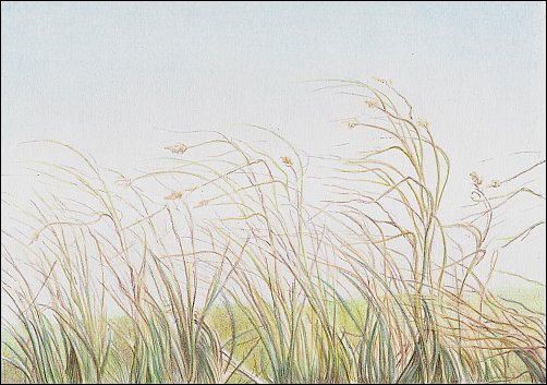 autumn-grass-demo-08