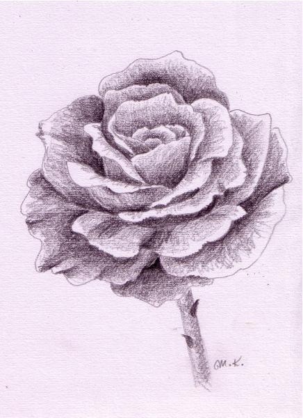 So Zeichne Ich Eine Rose Monika Kunze Wie Malt Man De Zeichnen