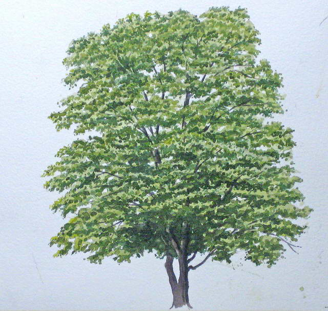 Einen Baum malen mit Aquarellfarben - John Fisher