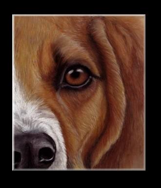 Tiere mit Pastellkreide zeichnen - Tieraugen zeichnen- Hund zeichnen - Petra Neuhaus