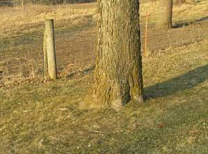 Einen Baum, Bäume, Wald zeichnen Anleitung –Diane Wright