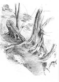 Einen Baum Bäume Wald Zeichnen Anleitung Diane Wright Wie Malt