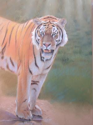 Ein Tiger am Wasser, Tiere zeichnen, Pastellzeichnung - Eric Wilson