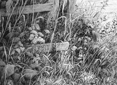 Gras, Gräser,Stroh oder Büsche zeichnen, Negatives Zeichnen – Mike Sibley