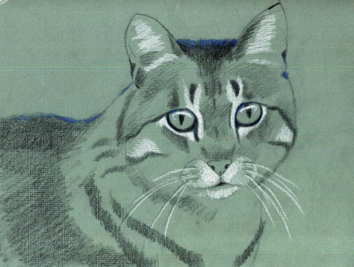 Die Katze zeichnen mit Buntstiften -Tiere mit Bunstift zeichnen