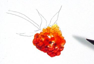 berrystep06web