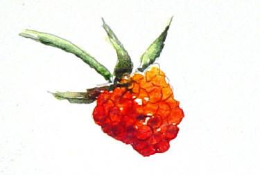 berrystep07web