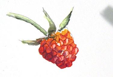 berrystep10web