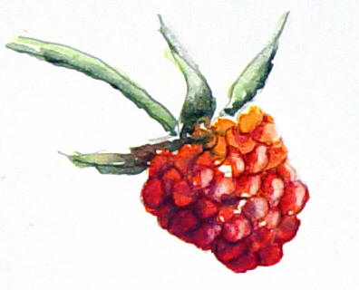 berrystep11web