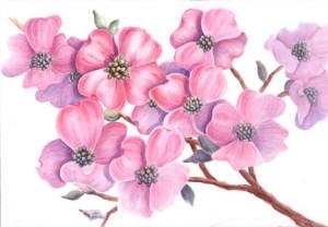 Wasserfarben Archive Wie Malt Mande Zeichnen Lernen Malen Lernen