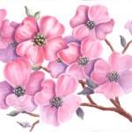 Blüten malen mit Aquarellfarben Blumen malen – Susan Bronsak