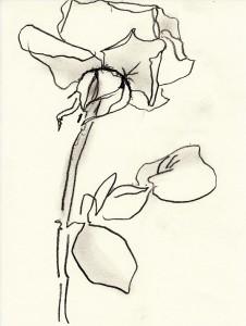rose-132