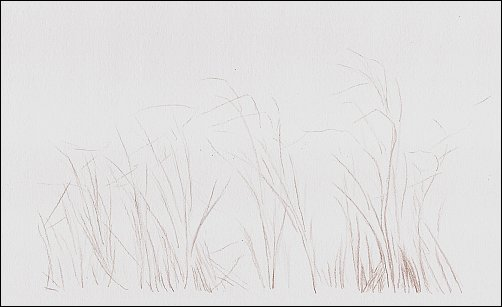 autumn-grass-demo-01