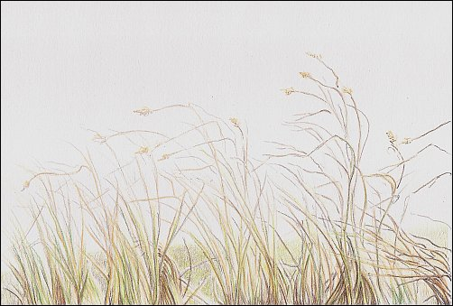 autumn-grass-demo-04