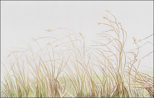autumn-grass-demo-05